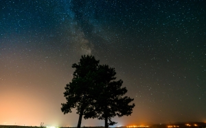 trees, sky, stars, nature, night, atmospheric, horizon, landscape, space, astronomy, midnight, darkness, astronomical, evening, constellation