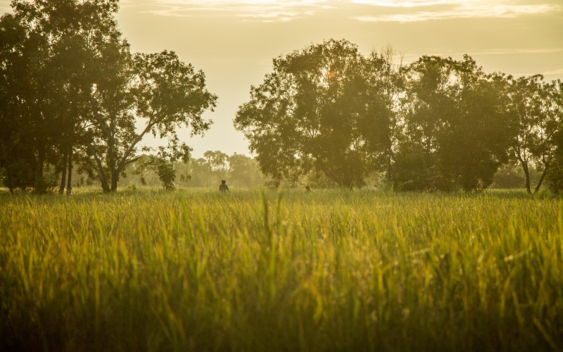 landscape, nature, grass, meadow, sunset, evening, summer, trees, field