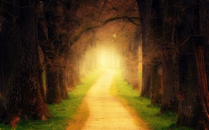 fairy, trees, forest, path, light, nature, trail, fog, haze, mood, mystical, romantic, landscape, autumn, magic