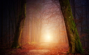 nature, forest, trees, light, sun, foggy, sunset, shadow, autumn, mood, branches, landscape, away, path, leaves, fall, foliage, mystical, orange, romantic, atmospheric, magic, fairy