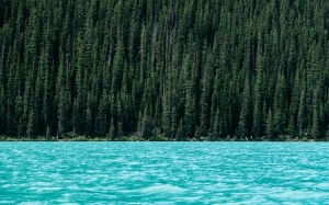 conifer, forest, idyllic, lake, landscape, nature, outdoors, river, scenery, summer, trees, water, woods, turquoise