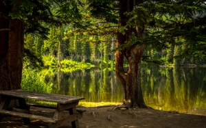 forest, nature, bench, lake, park, recreational area, fall, landscape, light, outdoors, water, scenic, summer, trees, wood