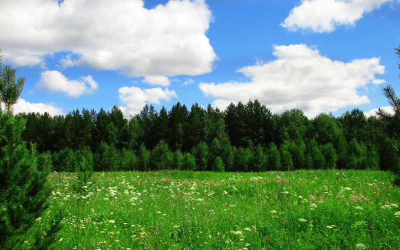 meadow, landscape, green, blue, field, forest, trees, summer, herbs, glade, grass, nature, flowers, wild, wood