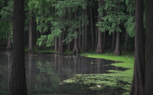 green, forest, mangroves, lake, nature, slime, river, trees, water, wood, wild
