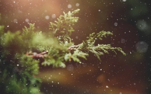 winter, plant, branch, tree, green, nature, snowflakes, background, snow, blur
