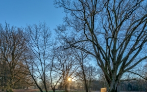 park, nature, north rhine-westphalia, germany, february, winter, trees, cold