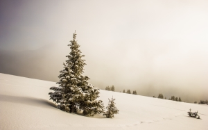 nature, tree, snow, winter, wood, fog, weather, fir, season, landscape