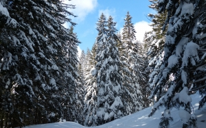 nature, landscape, trees, forest, mountain, snow, winter, sky, fir, season, spruce