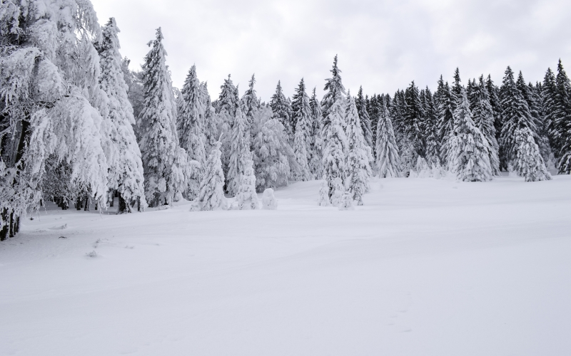 cold, december, forest, frost, frozen, landscape, nature, pines, season, snow, trees, white, wild, winter, wood