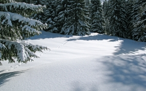 winter, snow, forest, trees, woods, nature, landscape