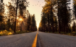 asphalt, california, country, countryside, dawn, forest, highway, landscape, nature, outdoors, perspective, road, rural, scenic, season, sun, sunlight, sunrise, sunset, travel, trees, wilderness, woods