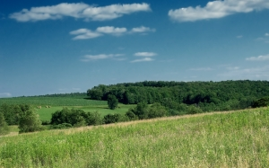 landscape, trees, grass, horizon, clouds, sky, field, farm, meadow, hill, summer, rural, pasture