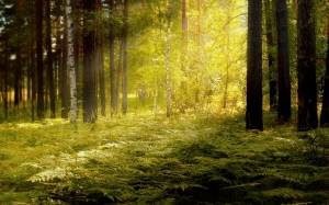 forest, nature, fern, sun, rays, landscape, summer, bright, wood, trees