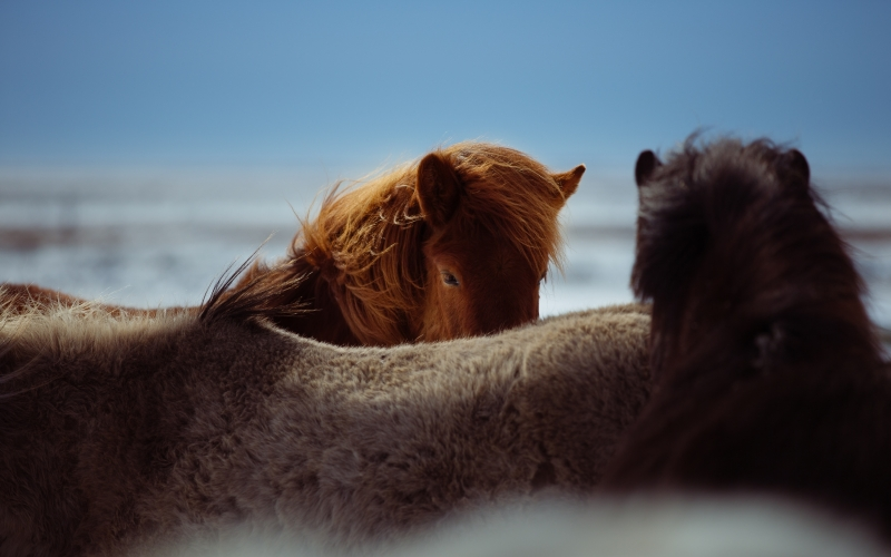 nature, animal, horseback, horse, close up, horses, head, macro