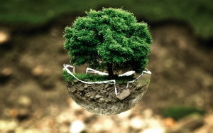 tree, nature, plant, environment, live, green, biology, grow, soil, flora, ecology, pollution, ball, bonsai, organic, conservation