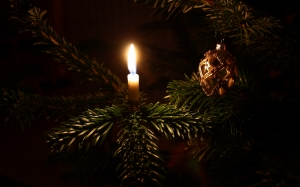 christmas tree, branch, light, night, holiday, fir, christmas decoration, spruce, christmas lights, xmas, new year, candle
