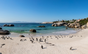 panoramic, african penguins, spheniscus demersus, boulders beach, simon