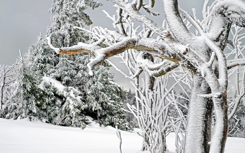 winter, white, cold, snow, tree, snowy, frost, branch, frozen, icy, nature, mountain, kandel, landscape