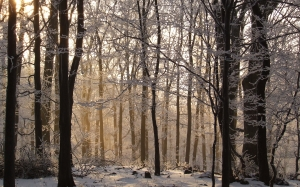 beech, forest, hungary, winter, snow, wood, nature