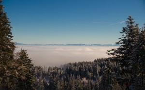 landscape, trees, nature, forest, wilderness, mountain, snow, winter, cloud, sky, sunlight, morning, season