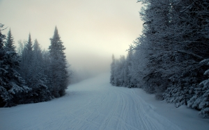 winter, snow, landscape, forest, trees, cold, nature, sky, mountain, frost, white, road, blue, pine, fir, spruce, evergreen