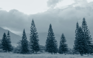 landscape, trees, nature, forest, wilderness, mountain, snow, winter, wood, mist, cloudy, frost, valley, foggy, pine, gray, blue, conifer, outdoors, spruce, woodland