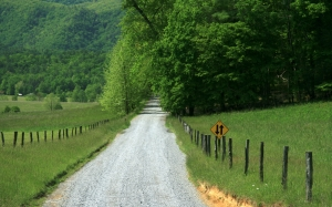 meadow, tennessee, road, countryside, fence, forest, woods, trees, field, nature, outside, summer, spring, green, mountain