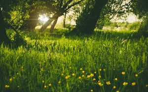spring, sunshine, park, forest, green, nature, yellow, flower, ray, sun ray, grass, trees